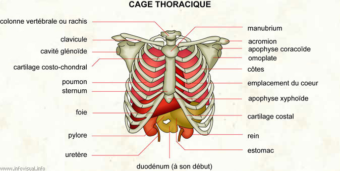 De fortes douleurs à mensuel dans le dos et le dessous du ventre