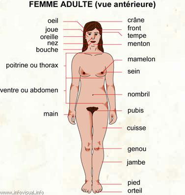 Anatomie Corps Humain Femme le corps humain (féminin de face)
